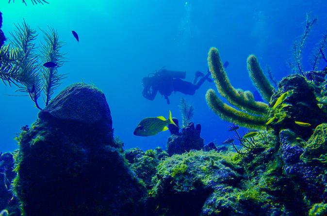 SCUBA Diving Tour at Roatan's North Shore