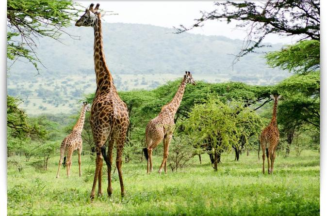 3 Days and 2 Nights Budget Camping Safari: Lake Manyara, Ngorongoro Crater and Tarangire