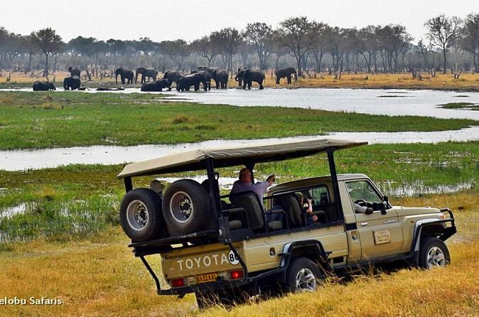 Full day moremi game safari from maun in maun 236170