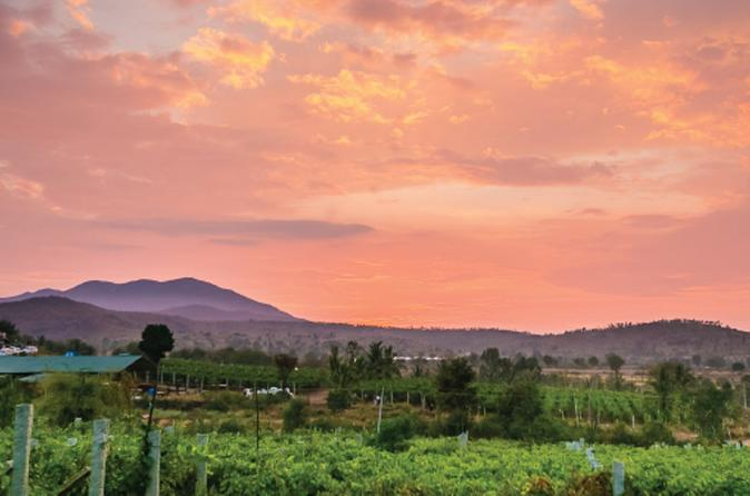 Private Day Trip to a Vineyard Including Wine Tasting and Lunch from Bangalore