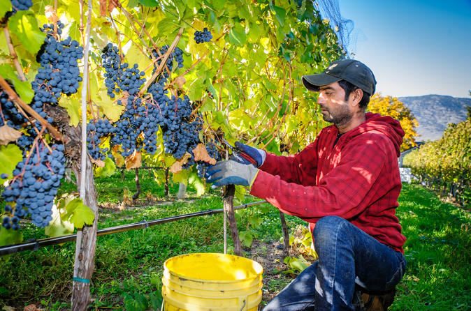 8 Hour Livermore Valley Wine Tasting Tour from San Francisco