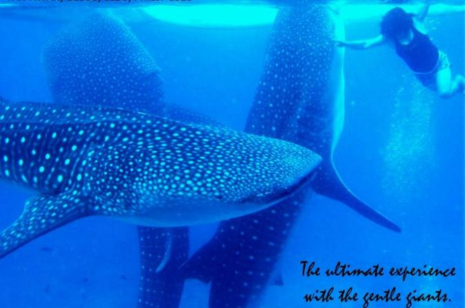 Whale shark swimming experience and aguinid falls from cebu in cebu city 234957