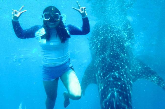 Whale Shark Swimming With Halal Lunch - Cebu City
