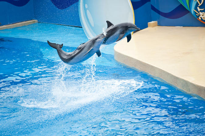 Ocean Park Full-Day Coach Tour with Hotel Pickup in Kowloon Area from Hong Kong""