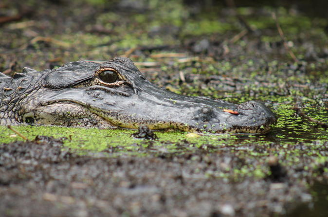 Extreme airboat rides near central florida in lake panasoffkee 235488