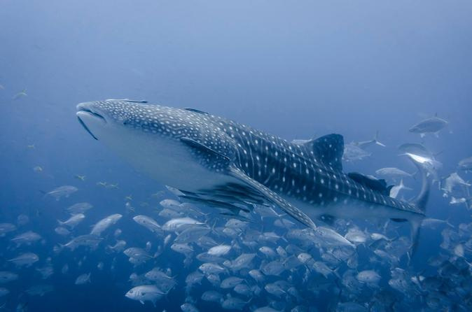 Koh Tao Dive Tour Including 3 Dives - Certified Divers Only