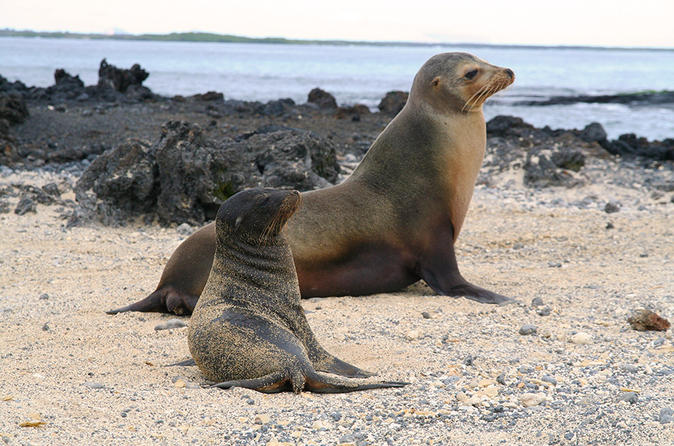 5-Day Galapagos Land Tour: Magic of Isabela Including Santa Cruz