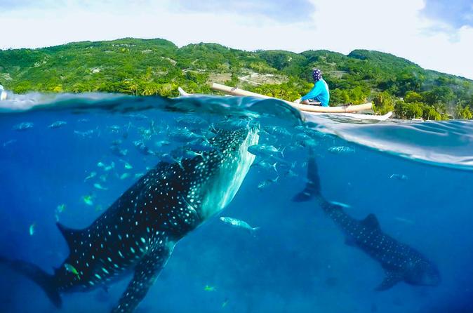 Oslob Whaleshark and Kawasan Falls Tour - SHARED TOUR