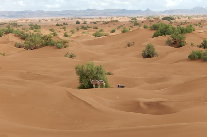 4 Day Desert and Draa Valley Day Trip From Mhamid