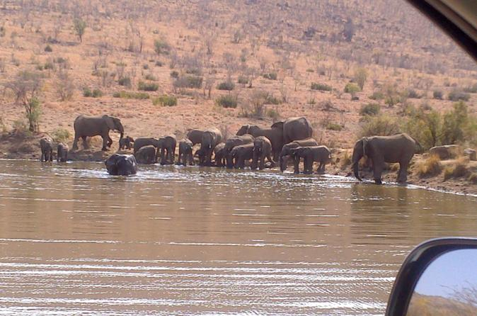 Pilanesberg National Park Day Tour from Pretoria