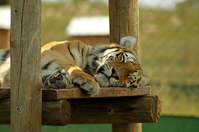 Rhino and Lion Park Guided Tour from Pretoria