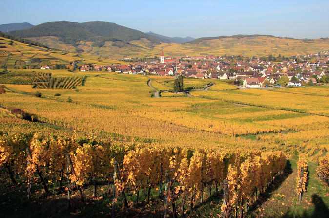 Alsace half day wine tour from colmar in colmar 298152