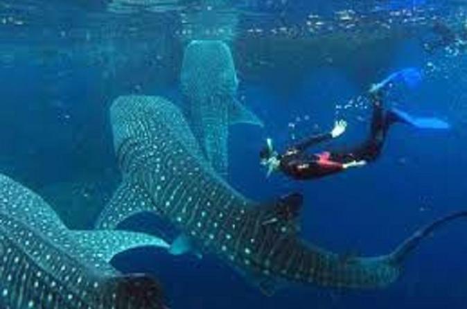 Oslob Whale Shark Watching and Tumalog Falls from Cebu