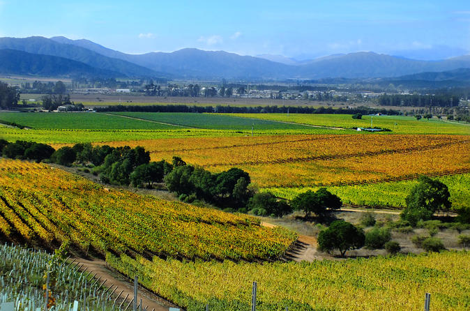 Casablanca valley wine tasting including 4 vineyards in santiago 322784
