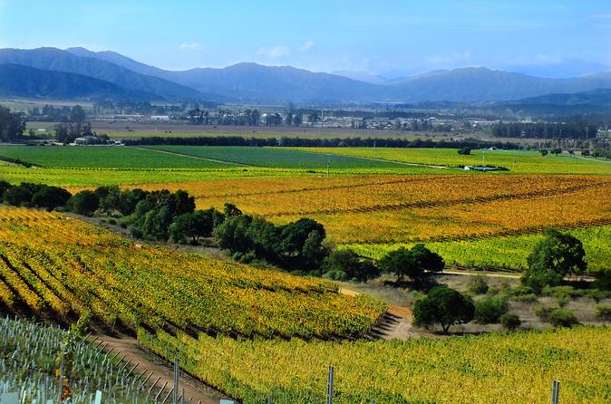 Degustação de Vinho para os Vale da Casablanca incluindo 4 vinhas
