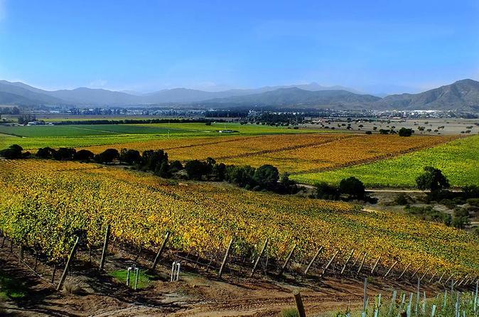 Half day Casablanca Valley Wine Tour in boutique vineyard