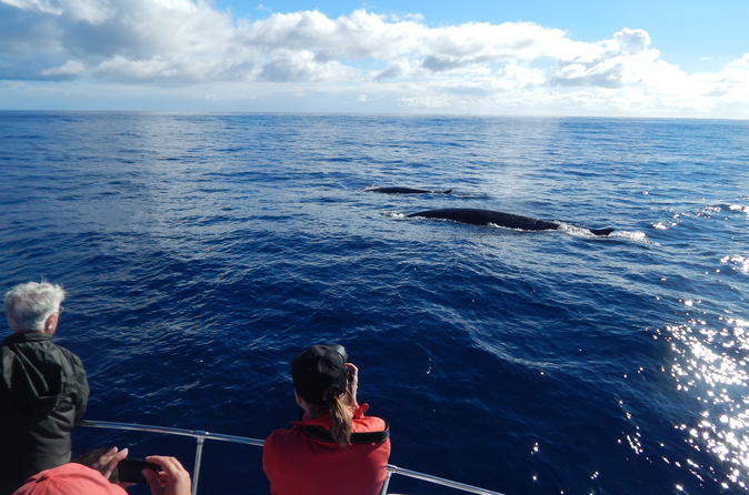Whale watching off portugal s coast in angra do hero smo 241635
