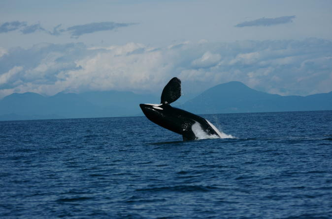Vancouver Whale Watching Safari