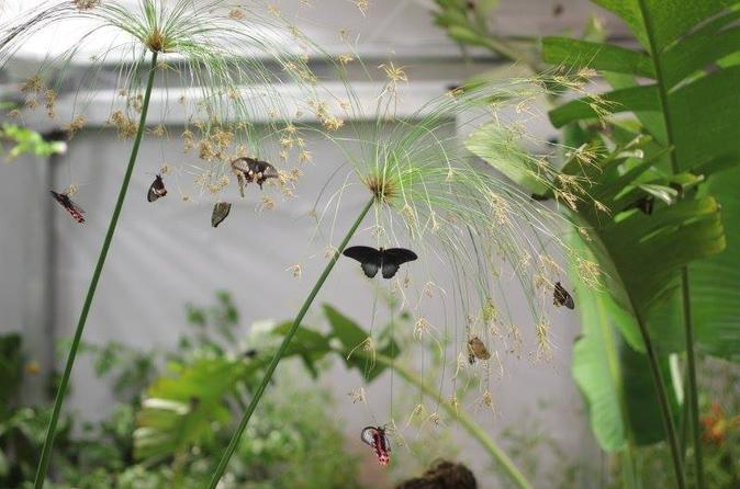 The butterfly house modica tour in modica 240397
