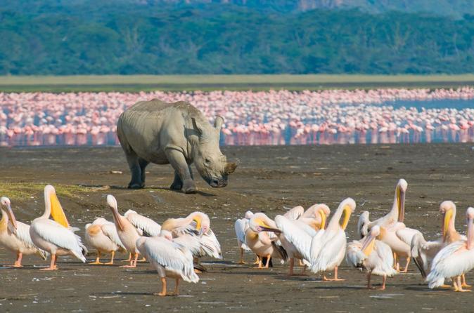 1 Night 2 Days Lake Naivasha,Hells Gate, Lake Nakuru Tour From Nairobi