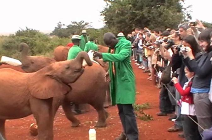 Half-Day Baby Elephant Orphanage and Giraffe Center Tour from Nairobi