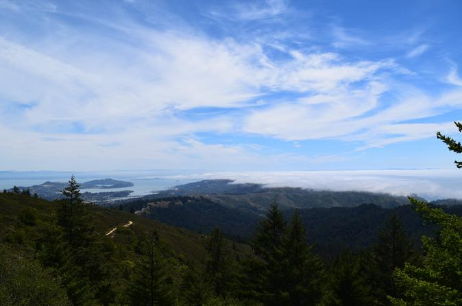 Mount Tamalpais Views and Redwoods Hike