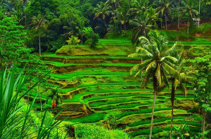 Ubud Natural Beauty Of Bali