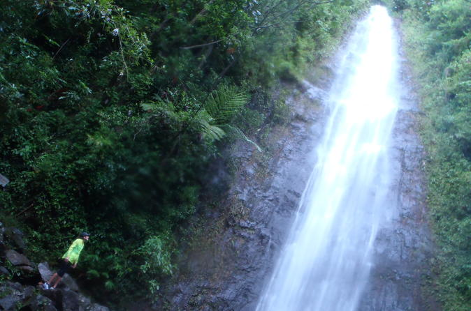 Manoa Waterfalls Run and Hike Tour