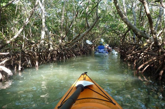 Mangrove tunnel eco kayak tour in sarasota 243194