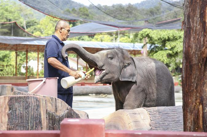 Private Day Tour to Elephant Orphanage Sanctuary and Batu Caves