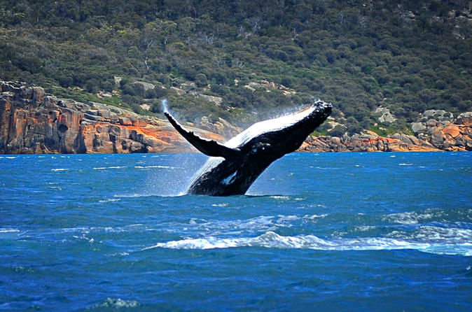 Sydney Harbour Whale Watching Sightseeing Tour via Helicopter and Sailing Yacht