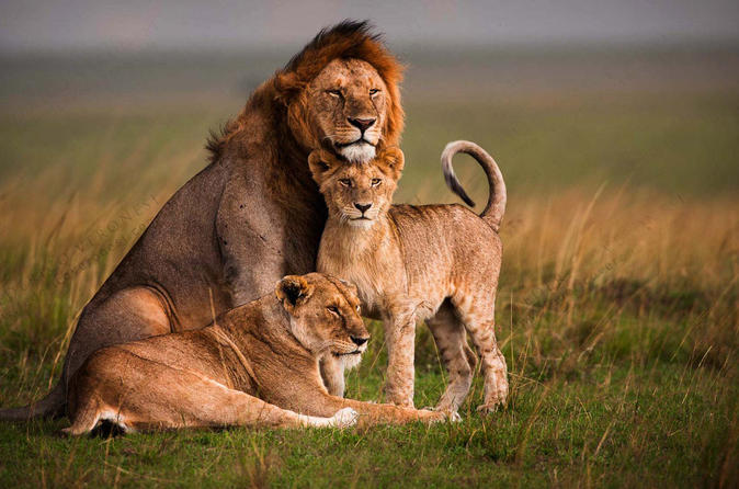 4-Days Masai Mara  and Lake Nakuru Luxury Safari All Inclusive