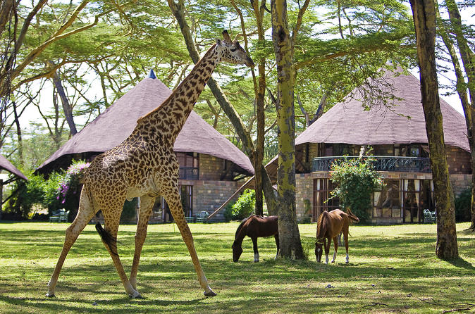 5days: Hell's Gate, Lake Naivasha, Lake Nakuru & Masai Mara Luxury Lodge Safari
