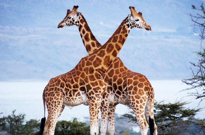 Best Nairobi Day Trip:Nairobi National Park, Elephant Orphanage & Giraffe Center
