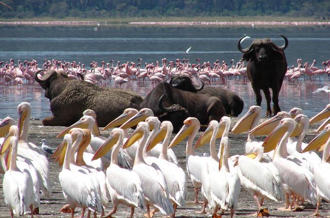 Lake Nakuru Day Trip From Nairobi