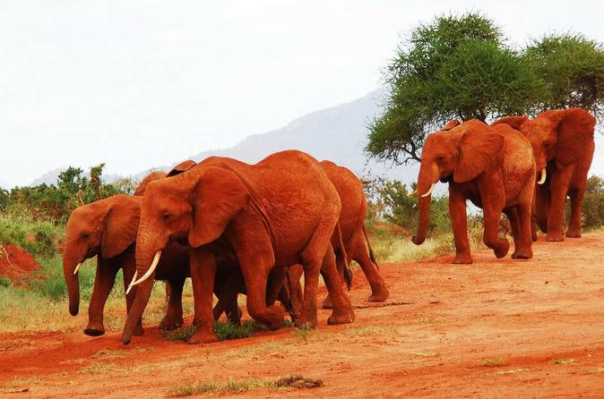 Volunteer Lumo Community Wildlife Sanctuary From Nairobi