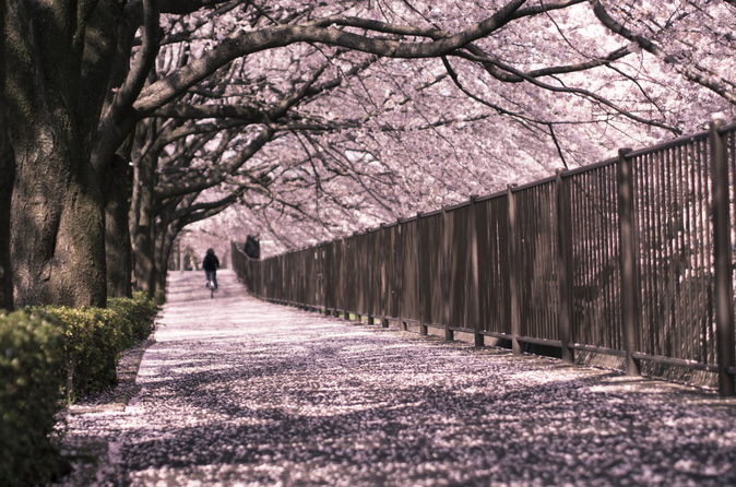 Excursão à Tokyo Tower e Observação de Flores de Cerejeira