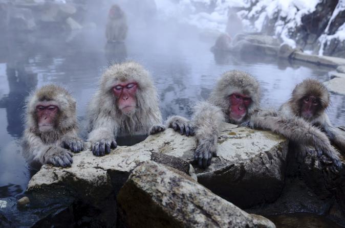 Viagem de um dia até Nagano, saindo de Tóquio: Macacos-japoneses, termas e templo Zenko-ji