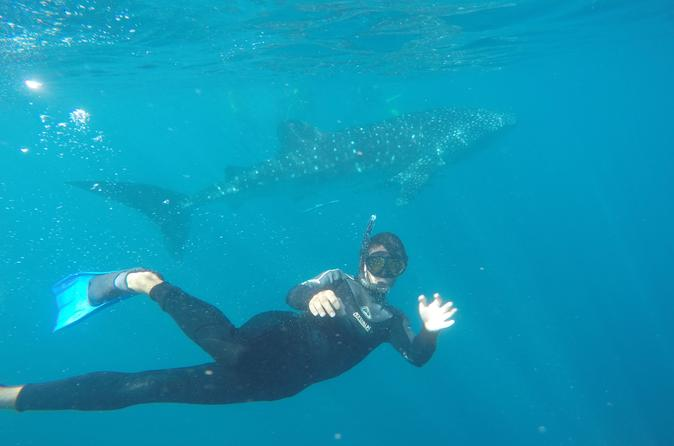 6-Day Ningaloo Reef Kayaking and Snorkeling with Whale Sharks from Exmouth