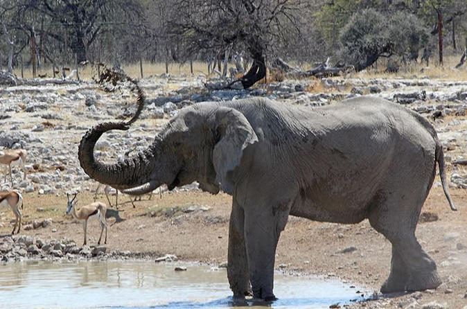 3 hour etosha national park game drive in outjo 278470