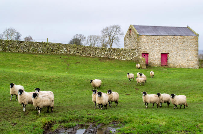 Full-Day, Small-Group Yorkshire Dales Winter Tour from York