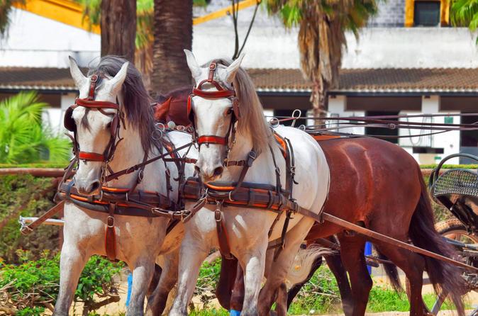Viagem de um dia para Jerez e Cádiz saindo de Sevilha