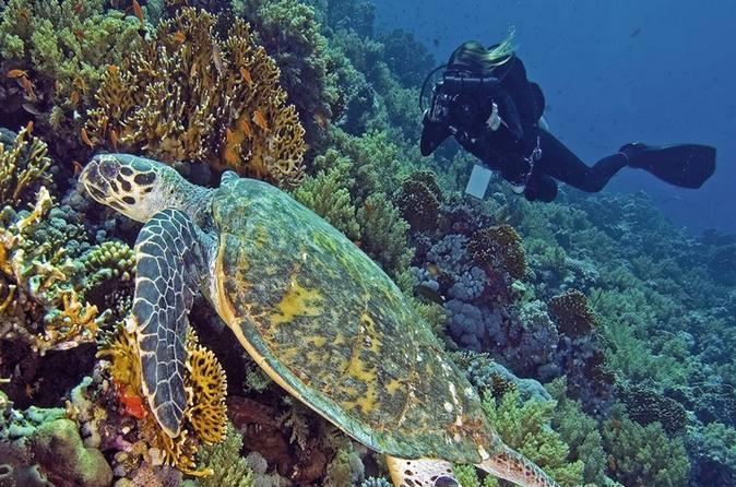 Hurghada daily scuba dive trip in hurghada 264759