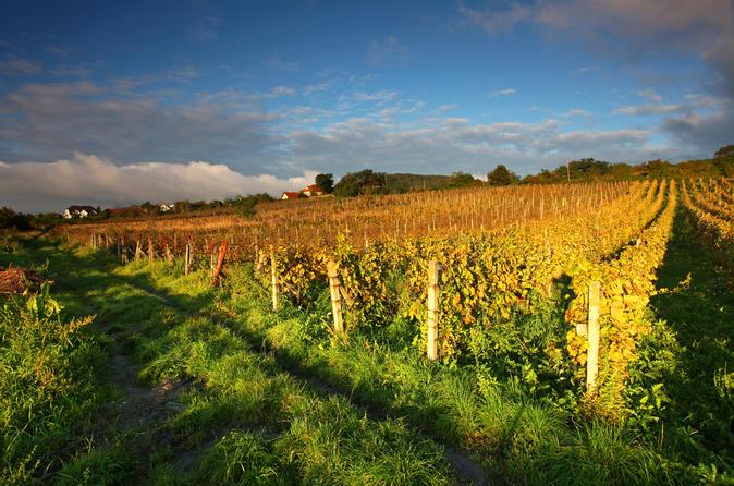 Small carpathian wine country day trip from bratislava in bratislava 163834