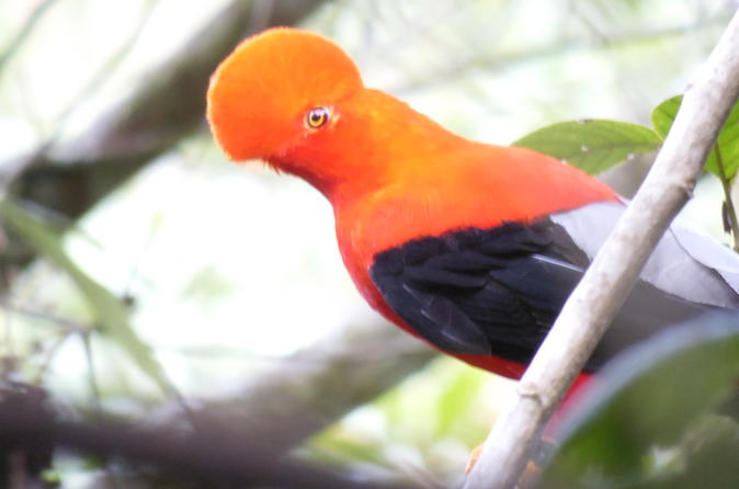 Private Bird-Watching Tour in Cloud Forest