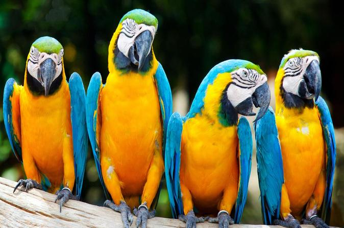 3-Day Excursion to Macaw Clay in Tambopata Natural Reserve