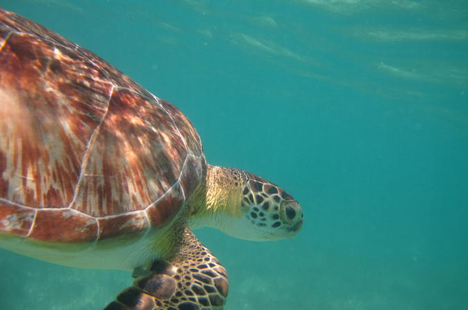 Snorkeling with turtles in akumal and yalku lagoon in akumal 290479