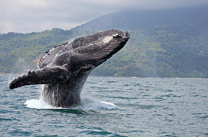 Private Tour: Whale Watching in Punta Mita