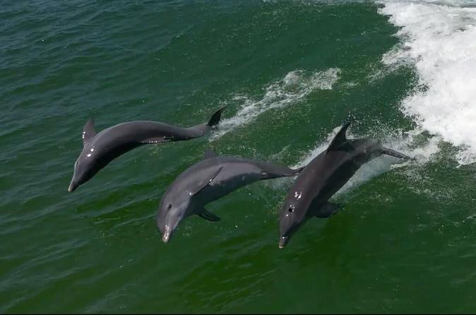 Egmont Key Island Snorkeling Adventure and Dolphin Cruise