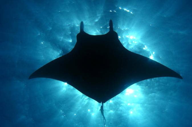 Manta Ray Snorkel Sunset or Moonlight Kona Big Island